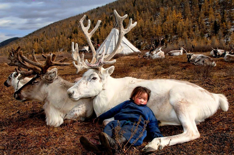 animals and human